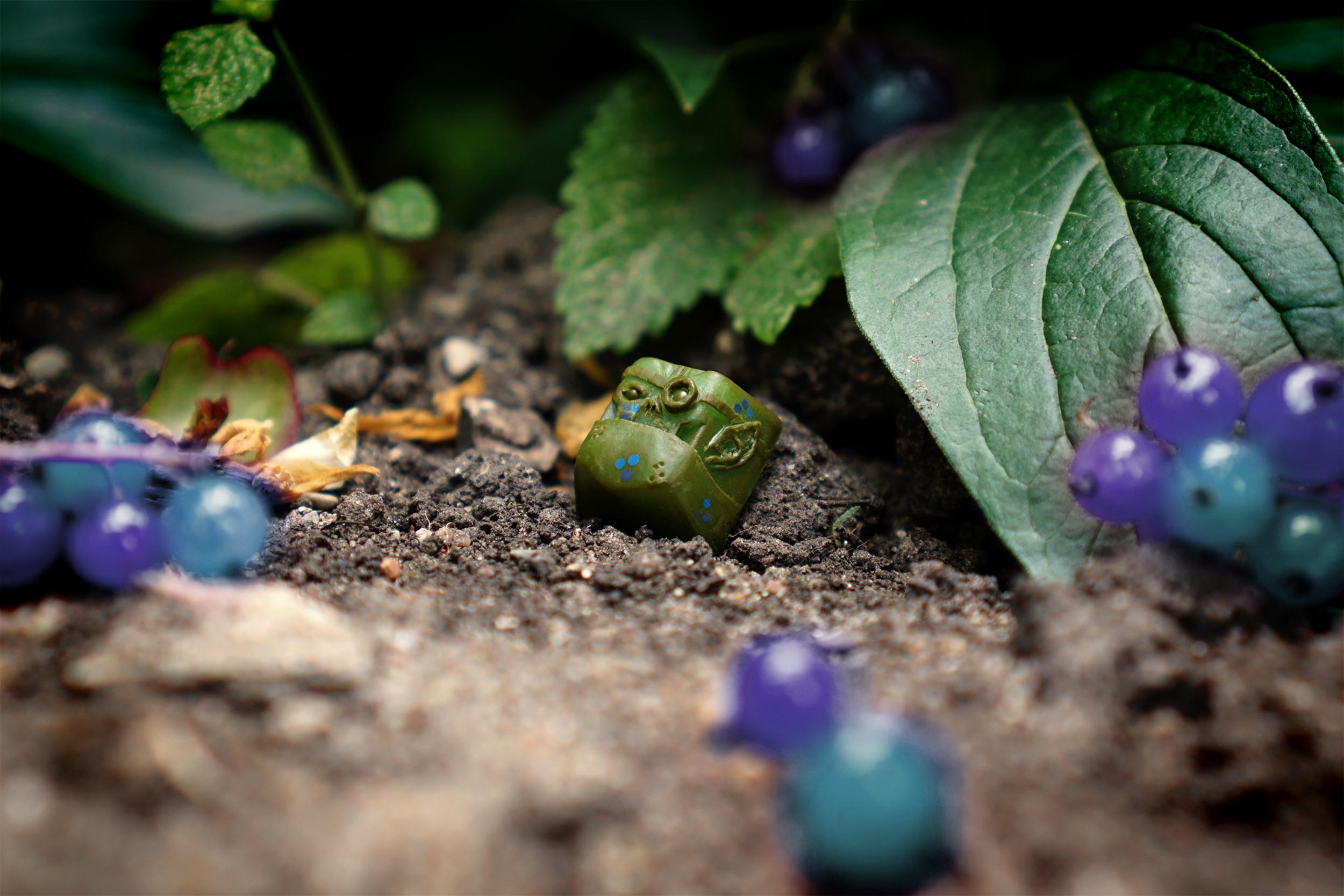 Elderberry Orxplorer