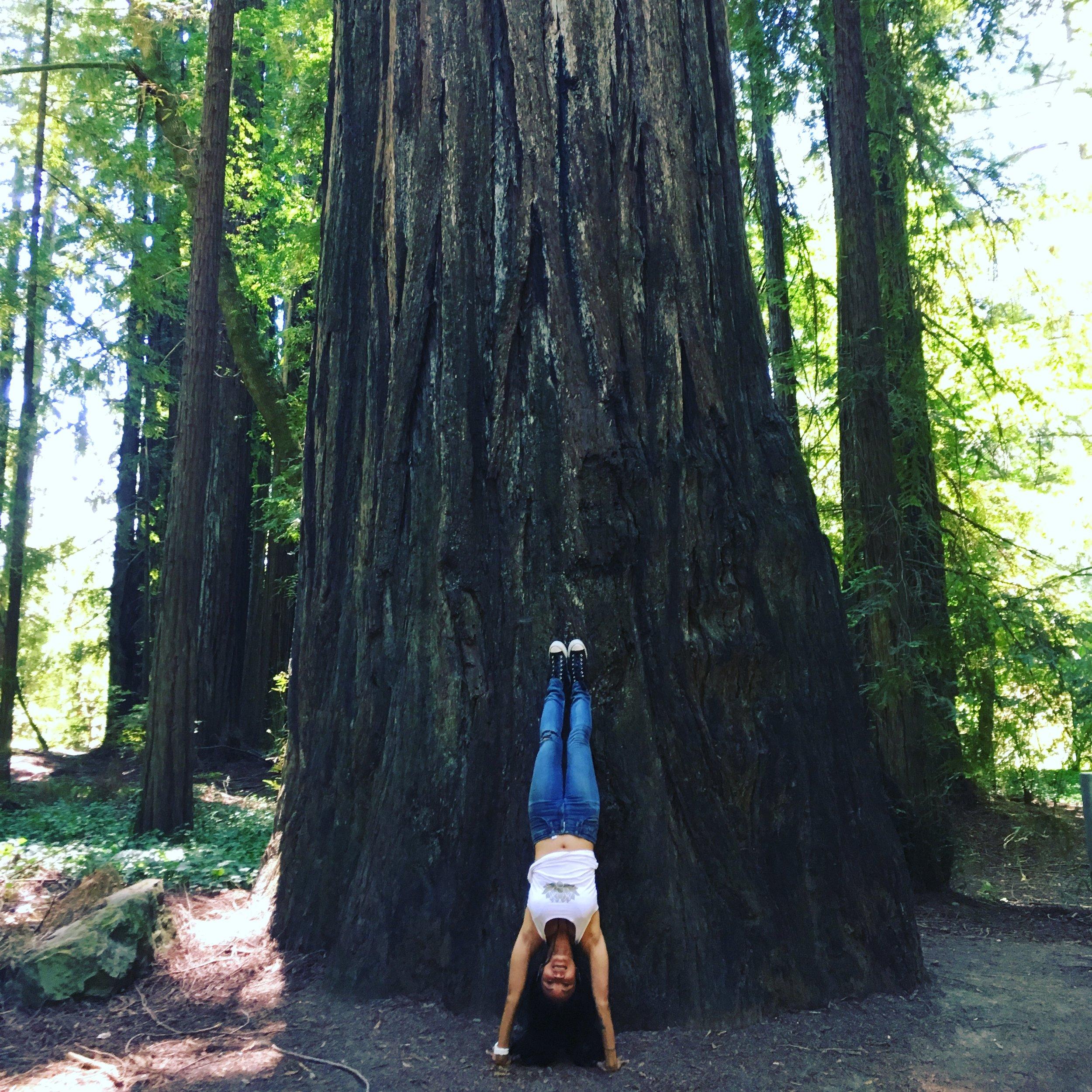 Handstand redwoods.JPG
