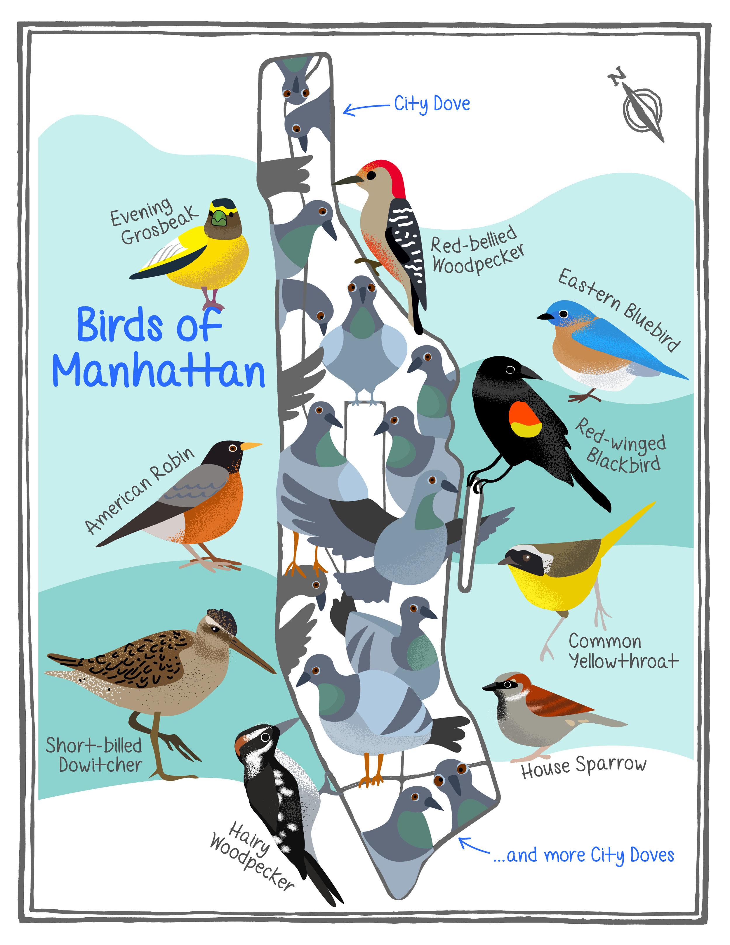 Lyubava Kroll, Mapping Manhattan