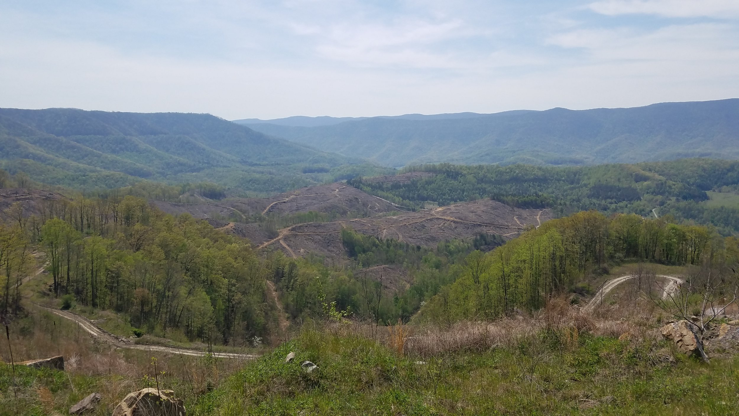 Timber Company Auburn Alabama,