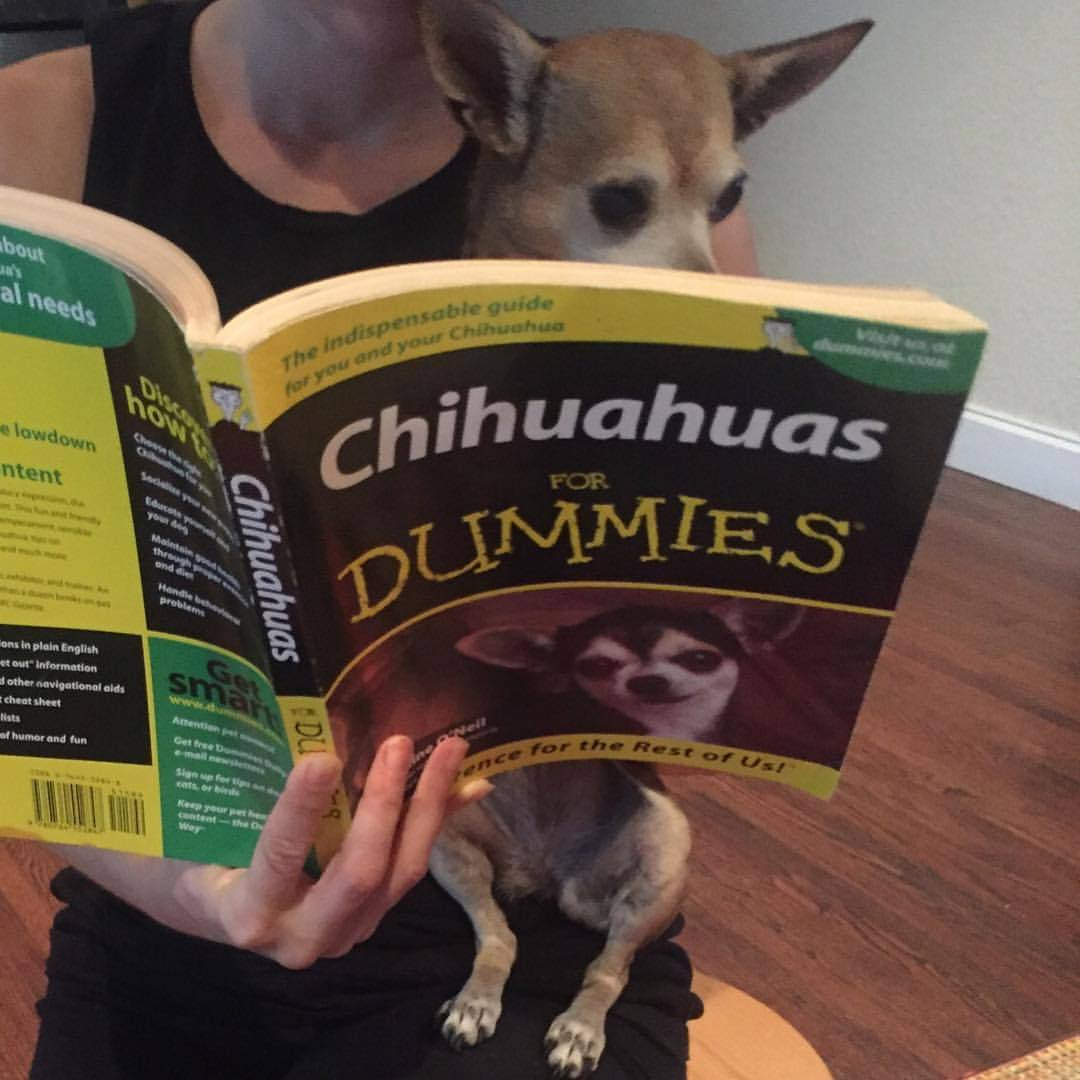 Suki is getting some love tips…Reading is fun for the whole family! Come out to @miamibookfair this Sat we playing at 7 pm ;) (at Petsmart)