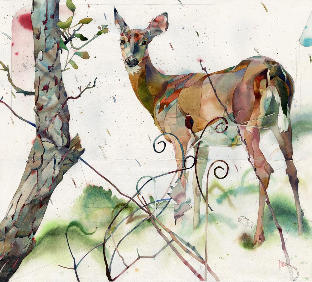 deer12w.jpg