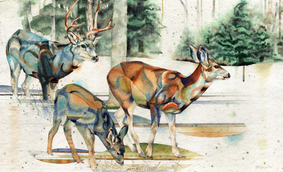 deer8-first-snow-w.jpg