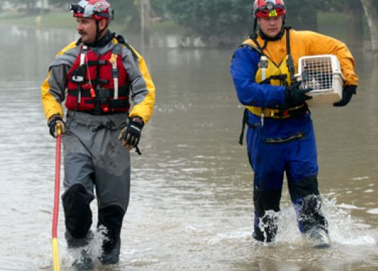 fir-flood-feature.jpg