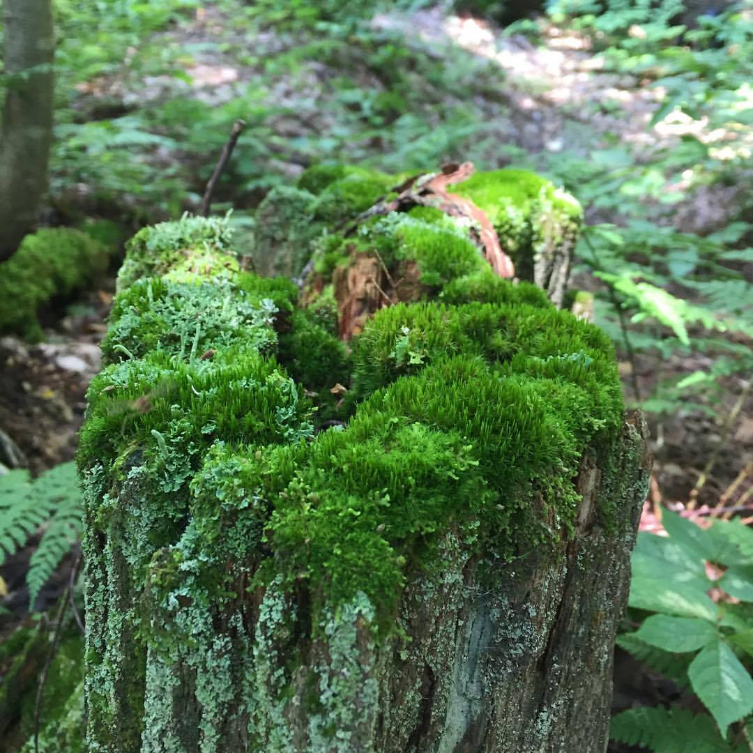 personal growth nature moss