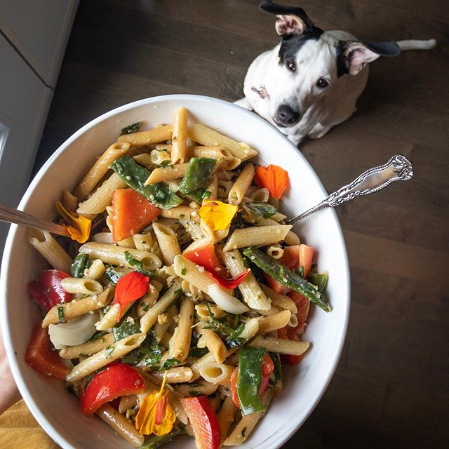 plant based & zero waste 🍃  you asked for it and Figgie delivers 💯 (seriously I cannot hold food without her sitting at my feet) . .  this fresh garden pesto pasta salad was a package free meal thanks to my local grocery store (onions and peppers) and @bulkbarnfoods. I love grabbing their chickpea penne which is packed with protein and fibre and cooks in 8 minutes. If you have a few pastas with various cooking times don't be after to cook them all together adding in the shortest cook times as the timer counts down...also if this was obvious to you you are brilliant ✨😆 . . 15 minutes later and zero plastic used so obvi my sustainability ego is proud 💚  What's the hardest part about plastic free shopping for you? What's the one thing they need to stop wrapping in plastic?! ✋🏽 🌎