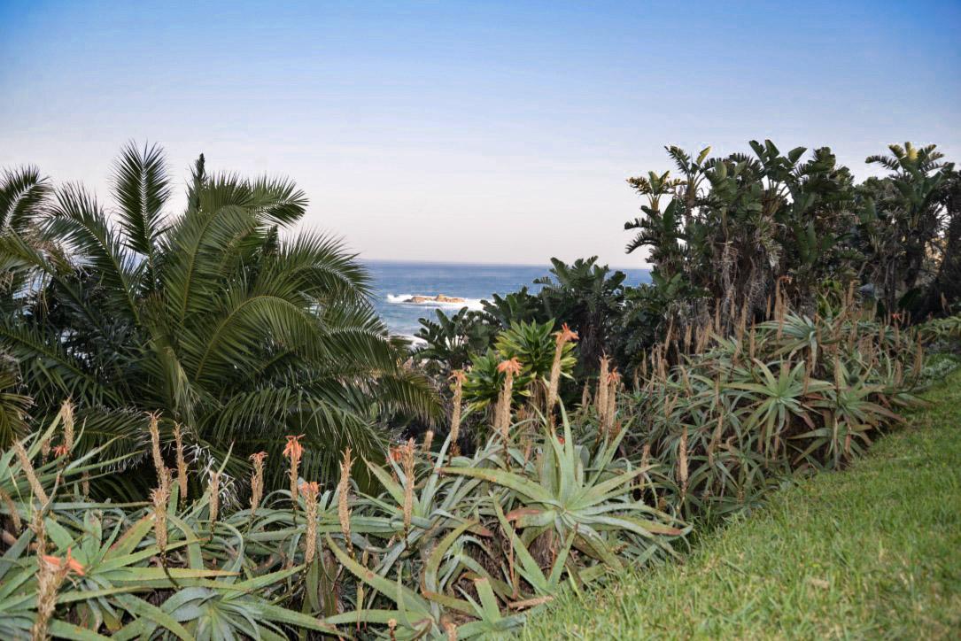 Aloes at the sea.jpeg