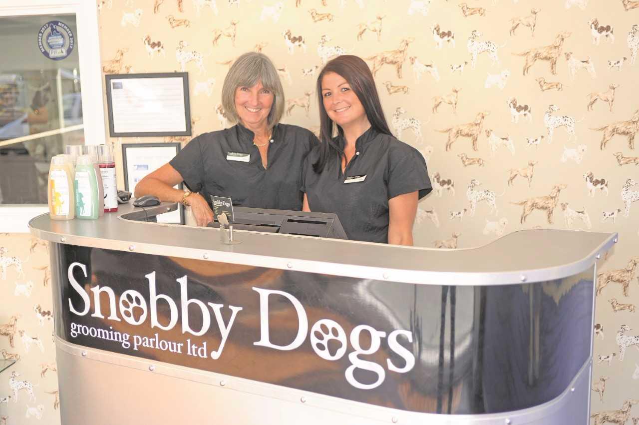Snobby Dogs Franchise