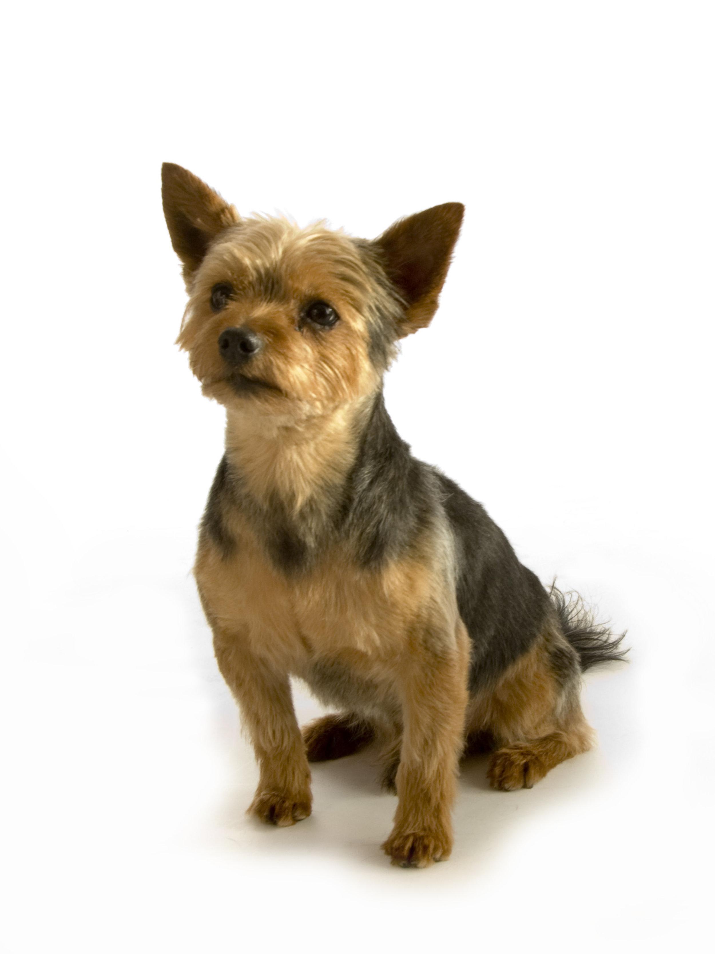 DSC_0043     Snobby Dogs Day 31-10-15.jpg