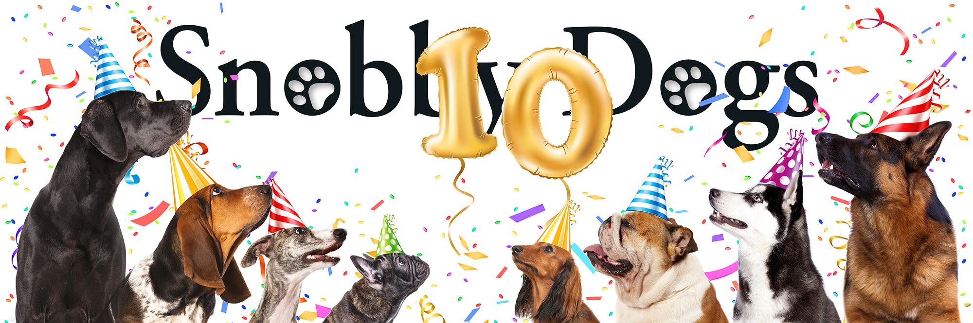 SnobbyDogs home page. Dog grooming, franchise, pet sitting, dog walking.