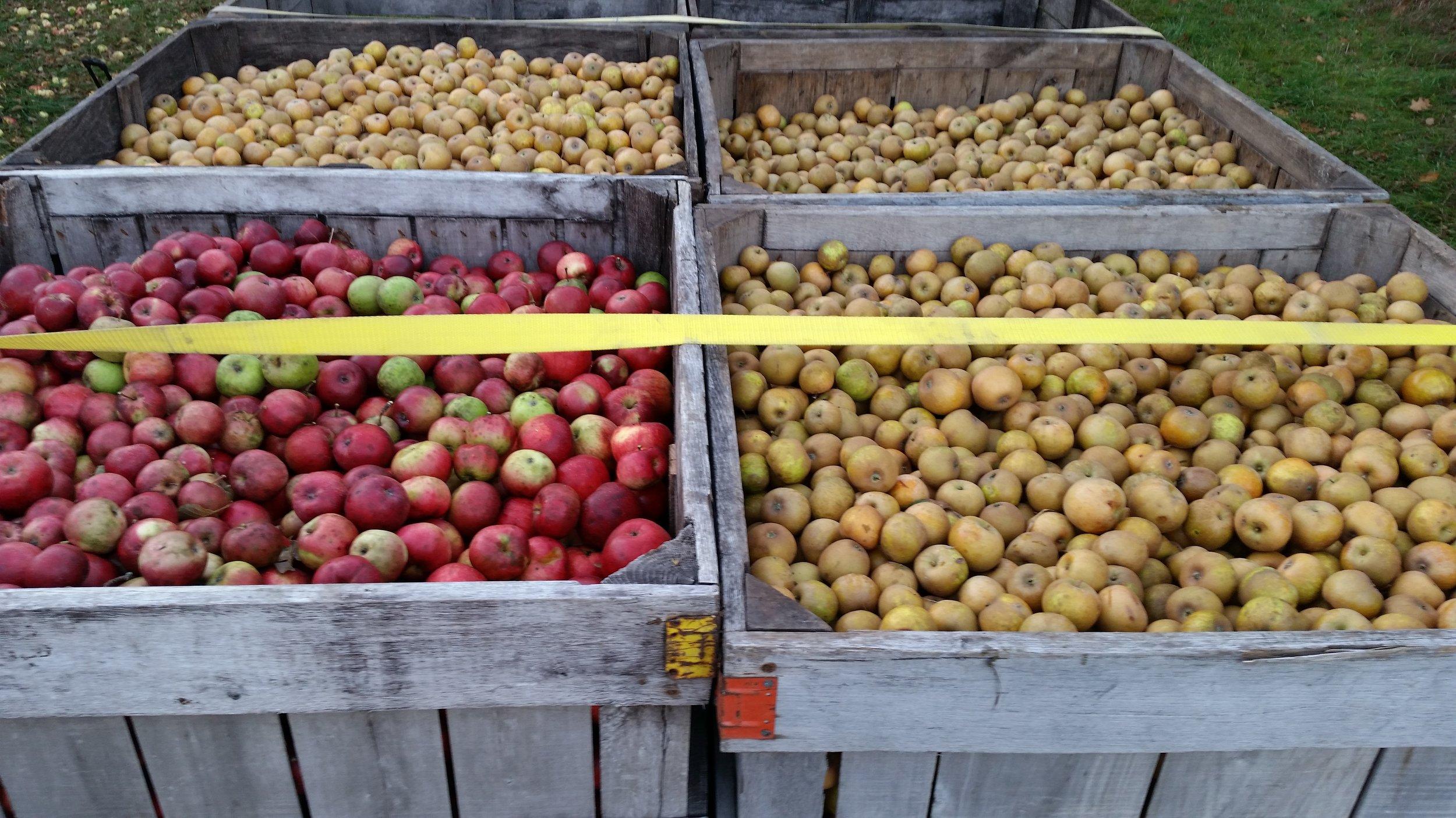 apple bins.jpg