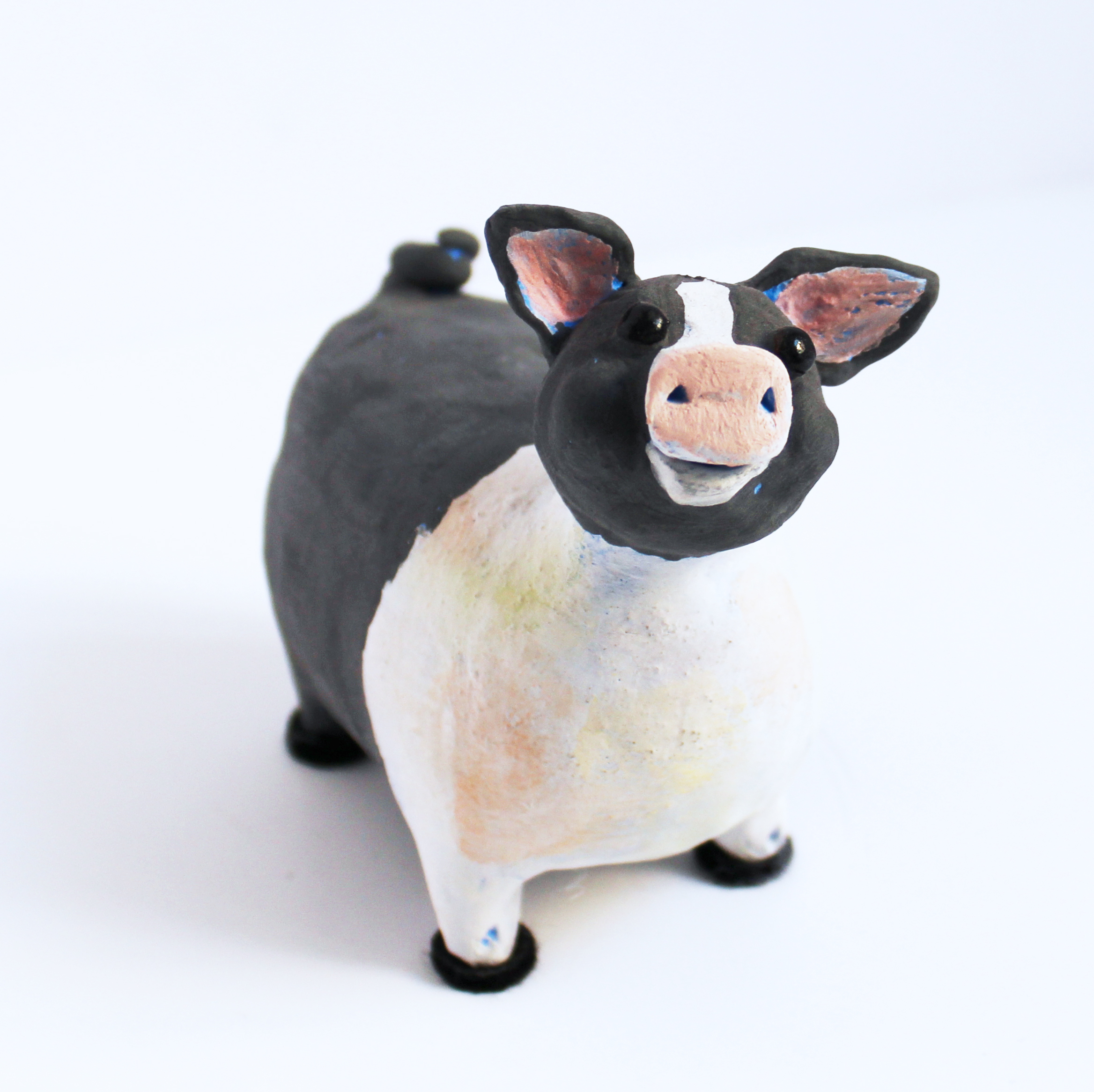 Black and White Pig