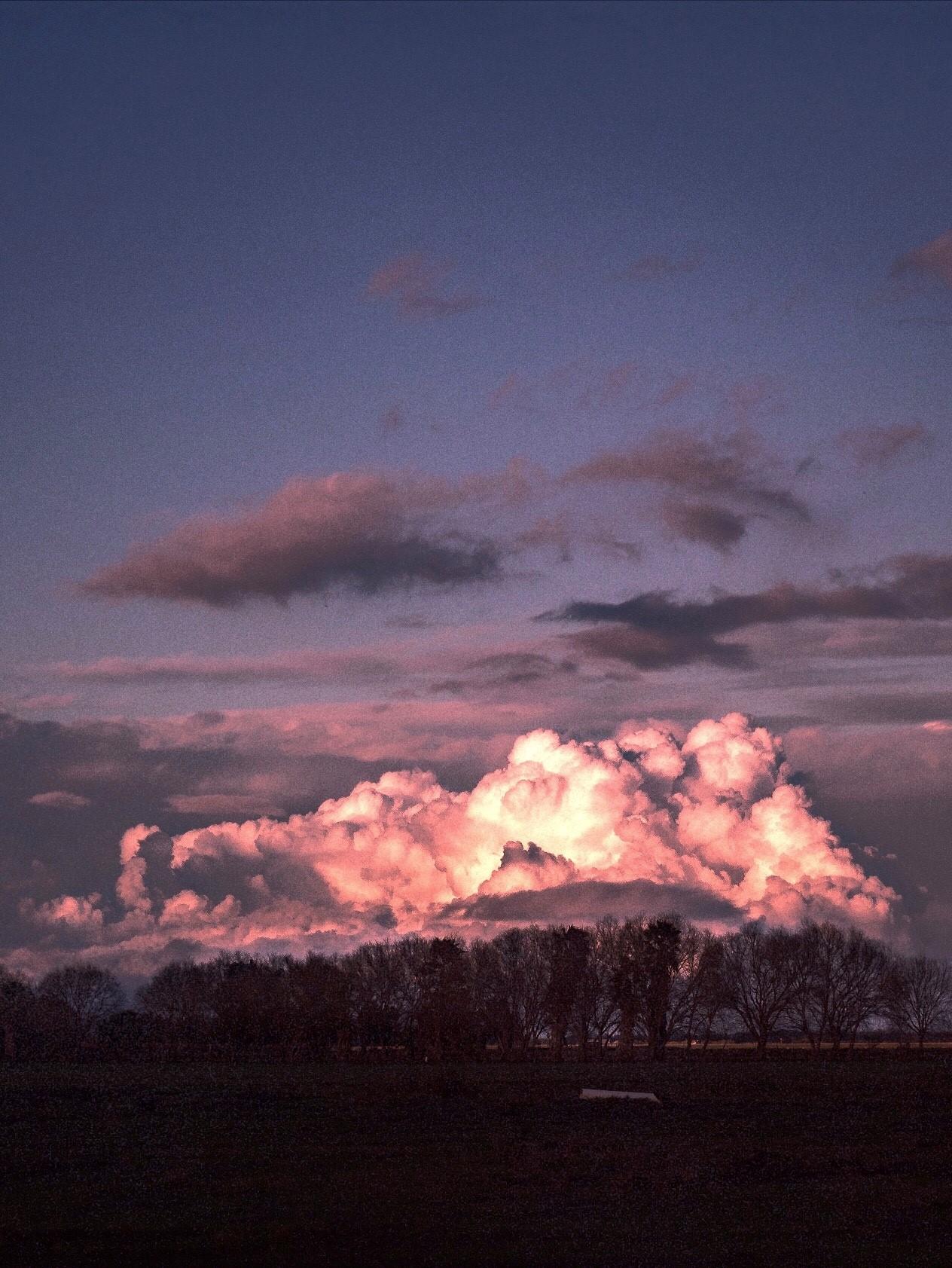 treeline x clouds.jpg