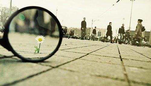 daisy in the crack.jpg