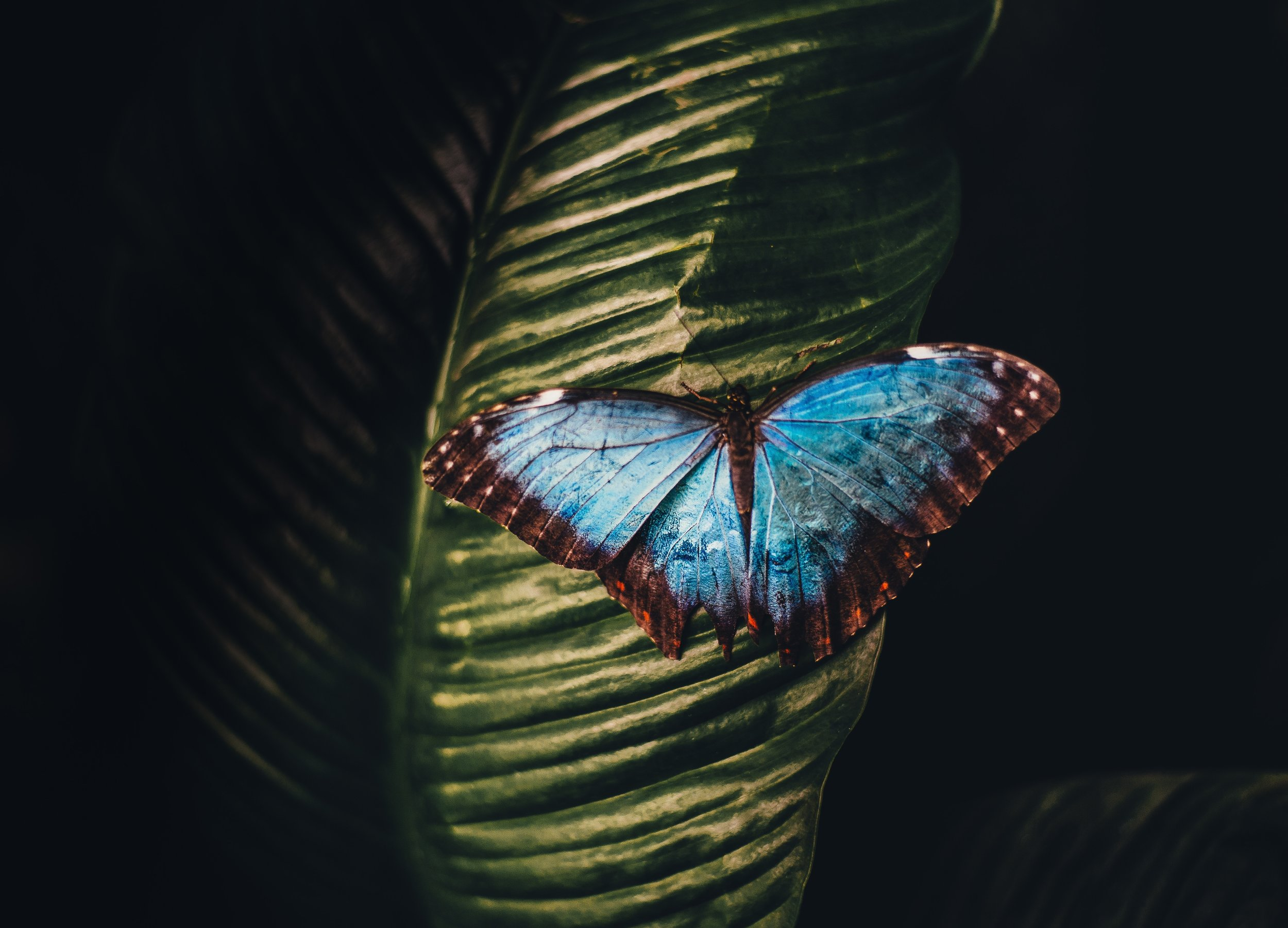 """- """"We delight in the beauty of the butterfly, but rarely admit the changes it has gone through to achieve that beauty.""""Maya Angelou"""