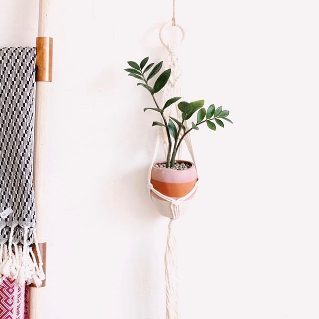 Isn't this little guy the cutest? 🌿Join me at @notoxlife on September 29 from 1-3pm for a macrame plant hanger workshop. See link in bio for more information. . . Plumeandpulp.com #practicemakesprogress #handmade #handwritten #handlettered #handmadefont #dailytype #goodtype #brushcalligraphy #typeinspired #calligraphy #caligraphymasters #handletteringdaily #handletteringpractice #illustrations #letteringcommunity #craftqueen👑 #losangelesartist #craftaholic #paperphile  #handcraftedinlosangeles #handletteringdaily #letteringtribe #handcraftedcards #plumeandpulp #losangelescalligrapher #workshop
