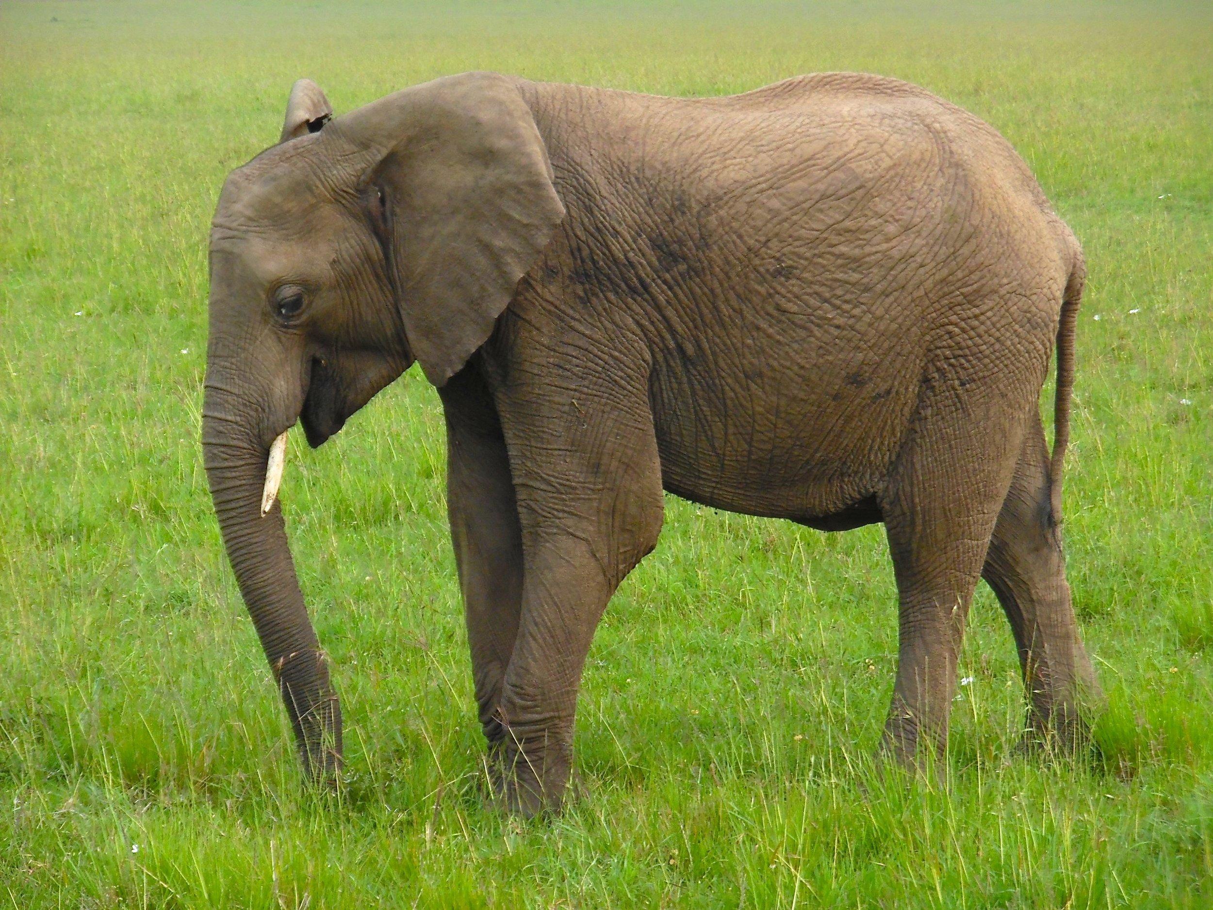 Elephant nice2.jpg