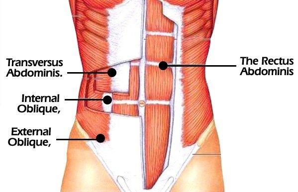 Core muscles : transverse abdominis, internal oblique, external oblique, rectus abdominis