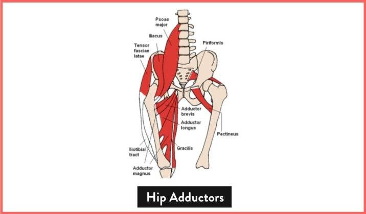 What Are Your Hip Adductors.jpg