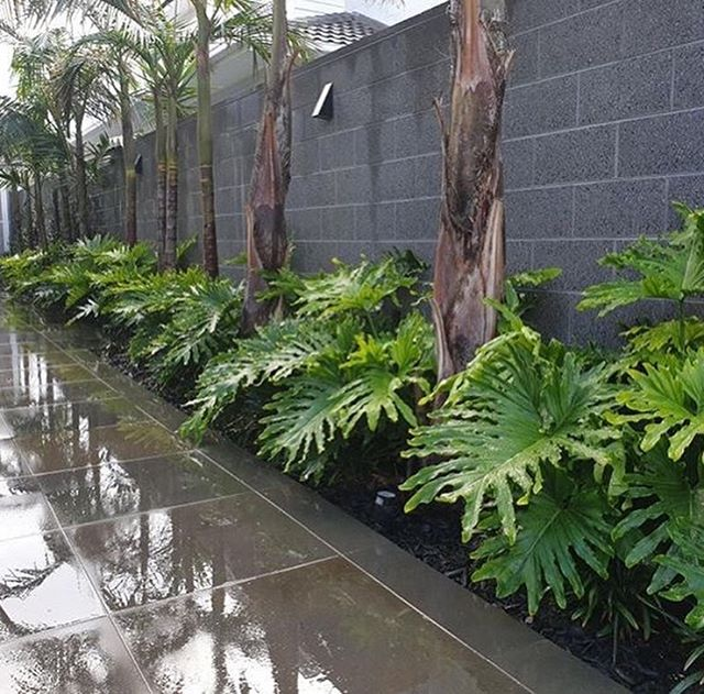 Love getting these updated photos of our Beaumaris project we completed around 12 months ago from Rob @thegreenergardencompany who is maintaining it. Great example of the importance/benefit of proper maintenance  #landscaping #maintenance #beaumaris #masterlandscaper #registeredbuildingpractitioner #landscapingvictoria #landscapingmelbourne #melbourne #tropical #hamptons #foliage #plants #design #landscape #landscapeconstruction #landscapedesign #palms #ixora #bayside #horticulture #designer