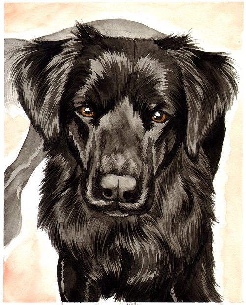 Sierra - Commissioned portrait done in pen & ink with water color.2015