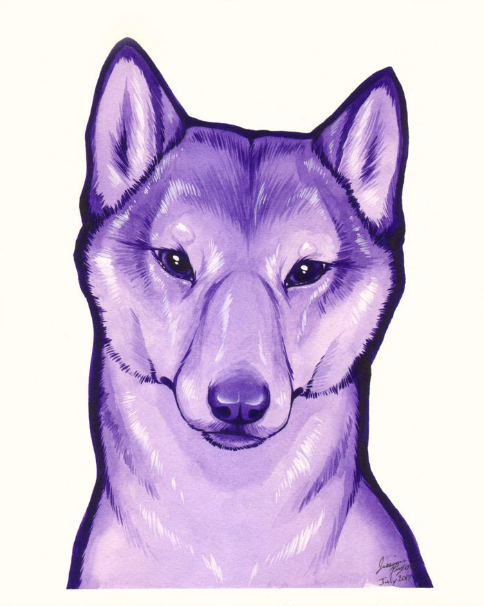 violet shiba - Water color done on 8x10 water color paper.2017