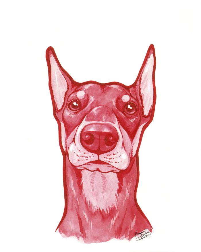 red dobie - Water color done on 8x10 water color paper.2017
