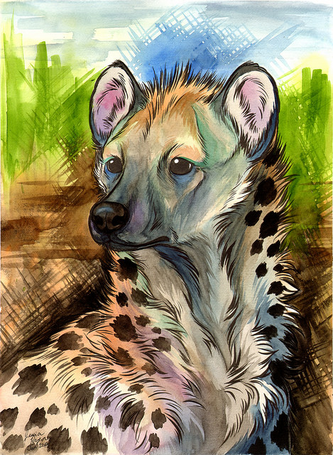 The spotted hyena - Ink and water color on 12x16 water color paper.2014