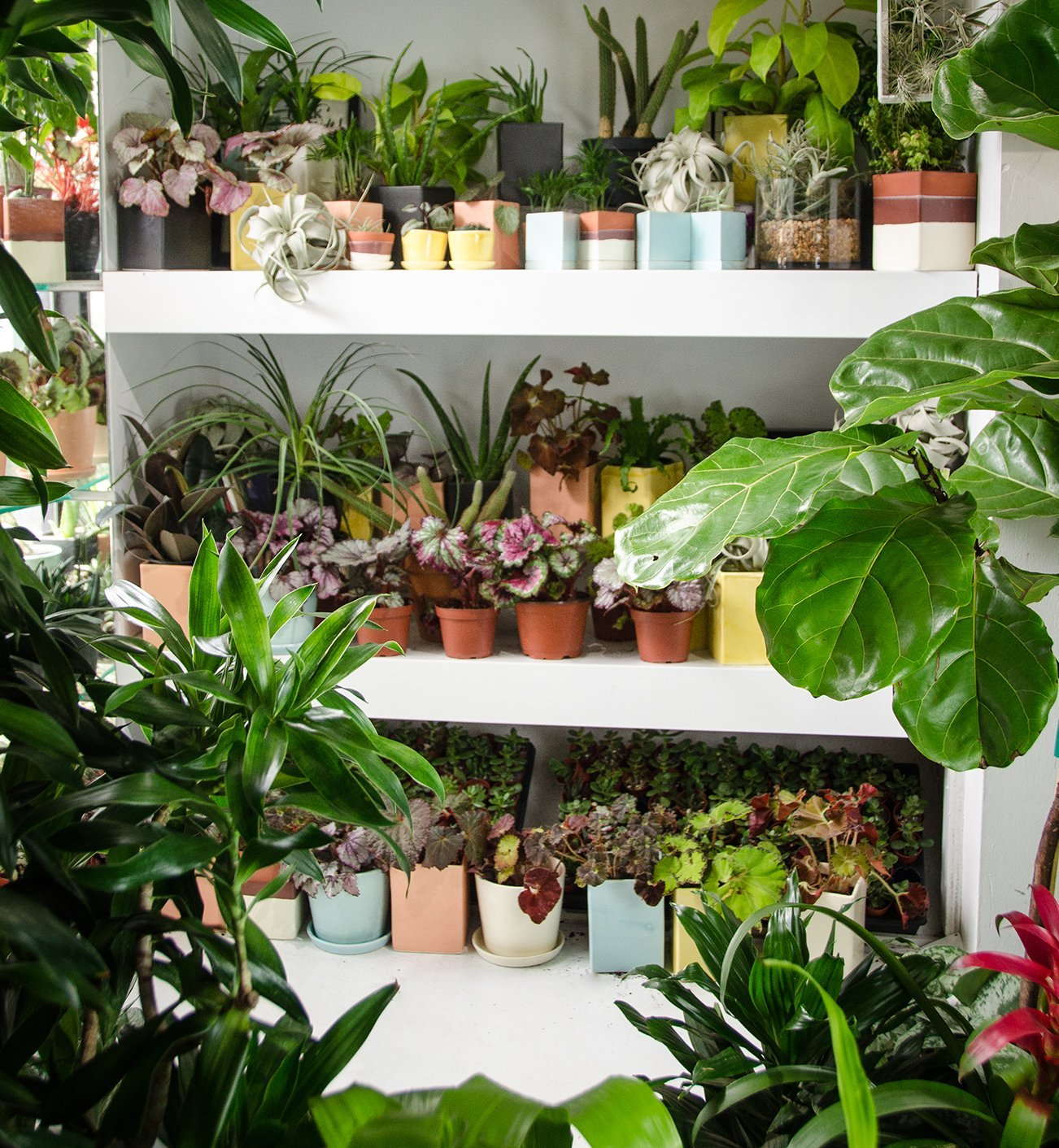 benefits-of-plants_the_sill.jpg