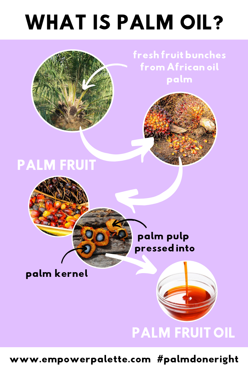 PALM OIL infographic.png