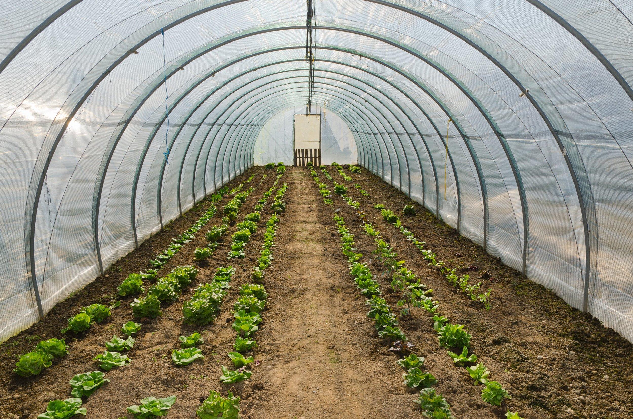 ejemplo de casa Farm-Hoop