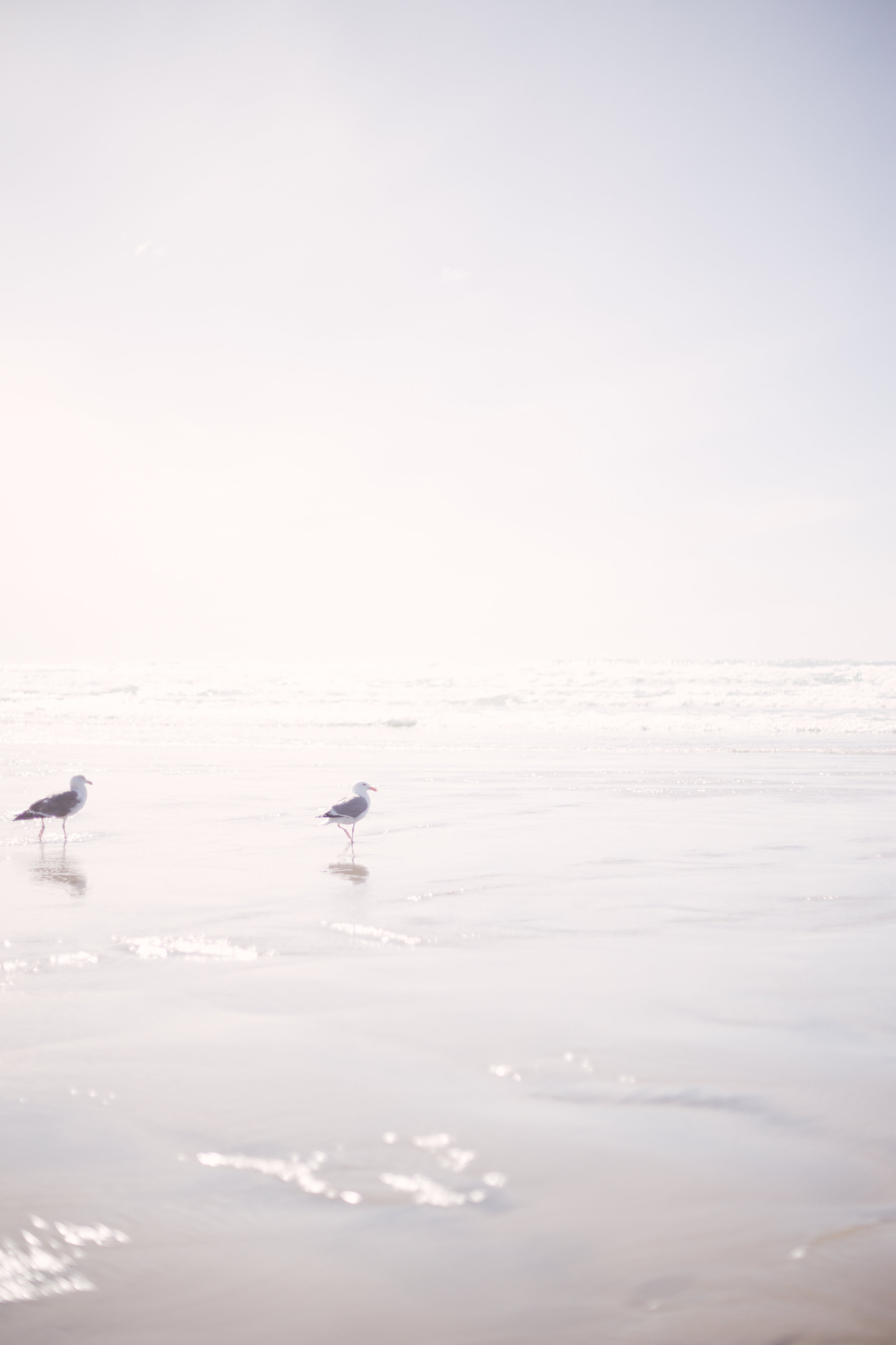 Ashley Tintinger Photography - Montana, Pacific Northwest, Destination Photographer - Cannon Beach, Oregon-6.jpg