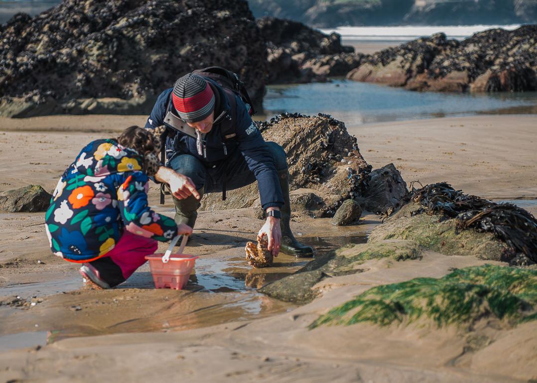 Spyder Crab rockpooling Cornwall-7233.jpg