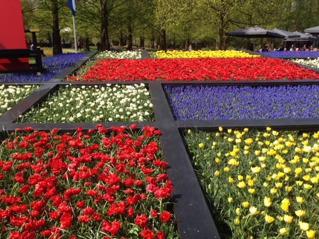 Tulips a la Mondrian! Keukenhof has various themes and exhibits each year.