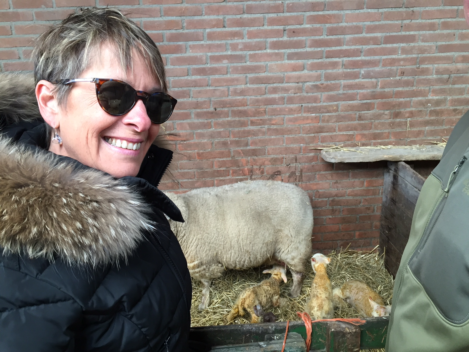 New born lambs!