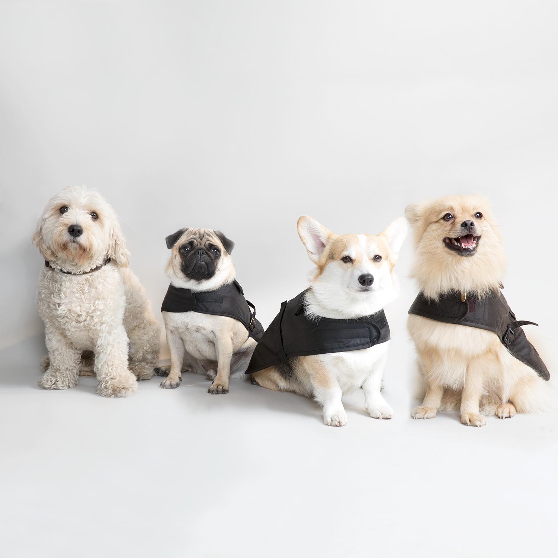 barbour dog clothes