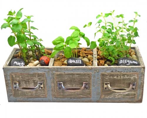 Plant Nite Herb Garden in Three Drawer Planter.jpg