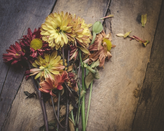 flower petal 2.jpg