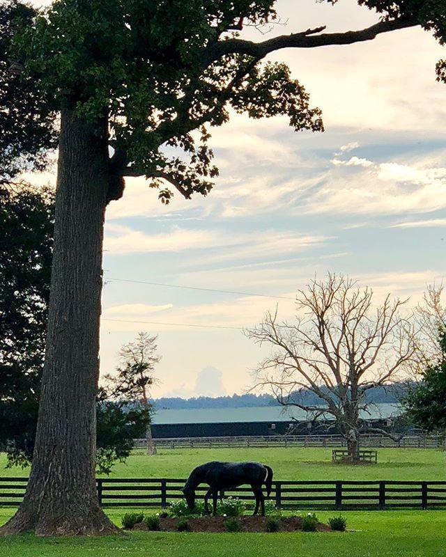 #Kentucky  #arcadiafarm