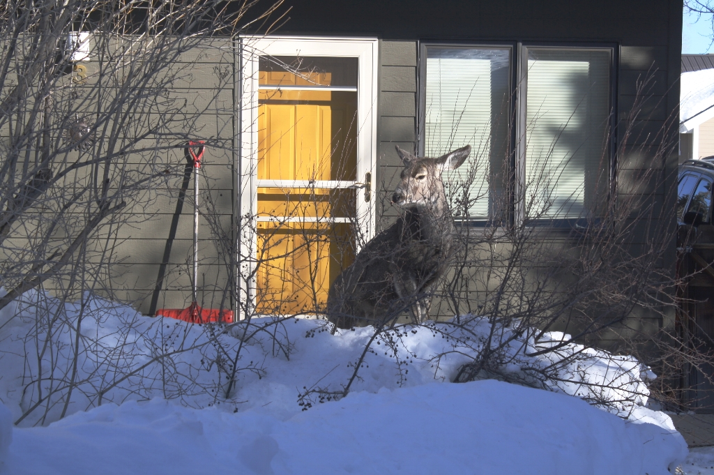 2 Bedroom End Unit & Deer
