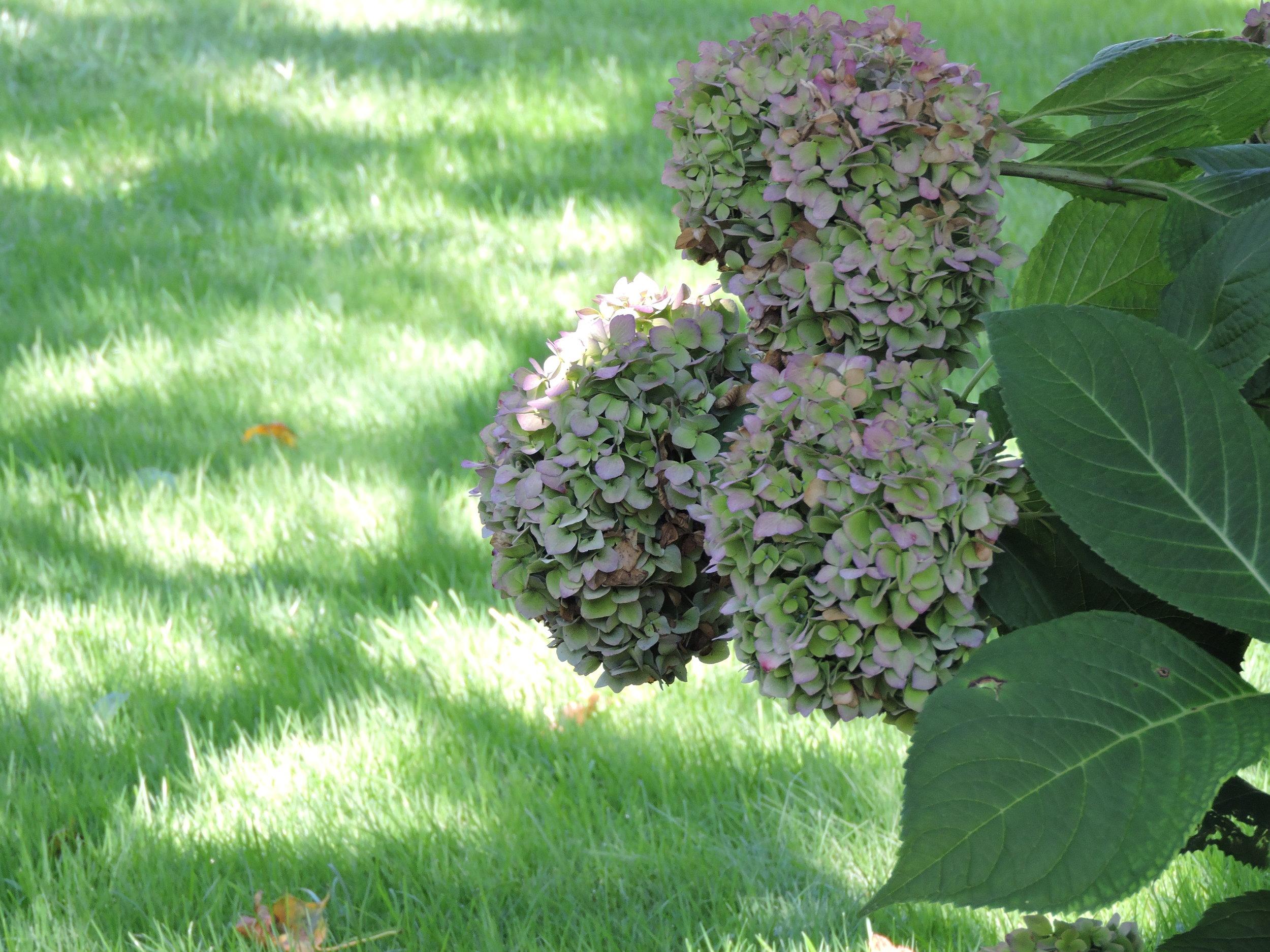 Martha's Vineyard Heaven 3373.JPG