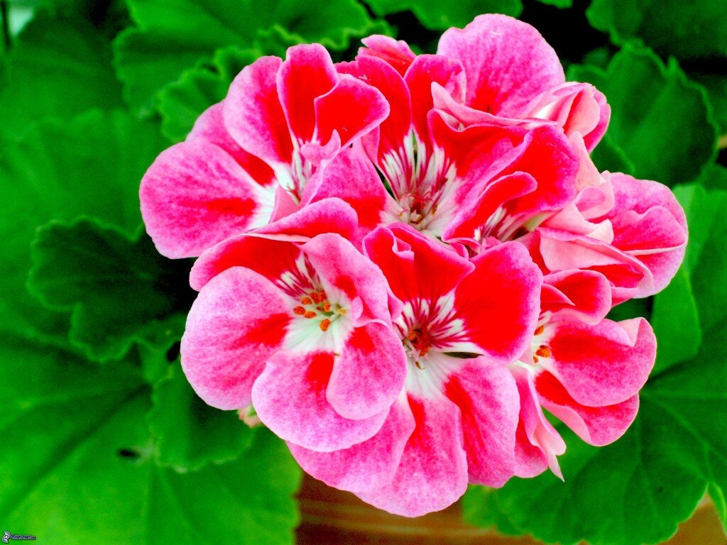 Summer Plants - .