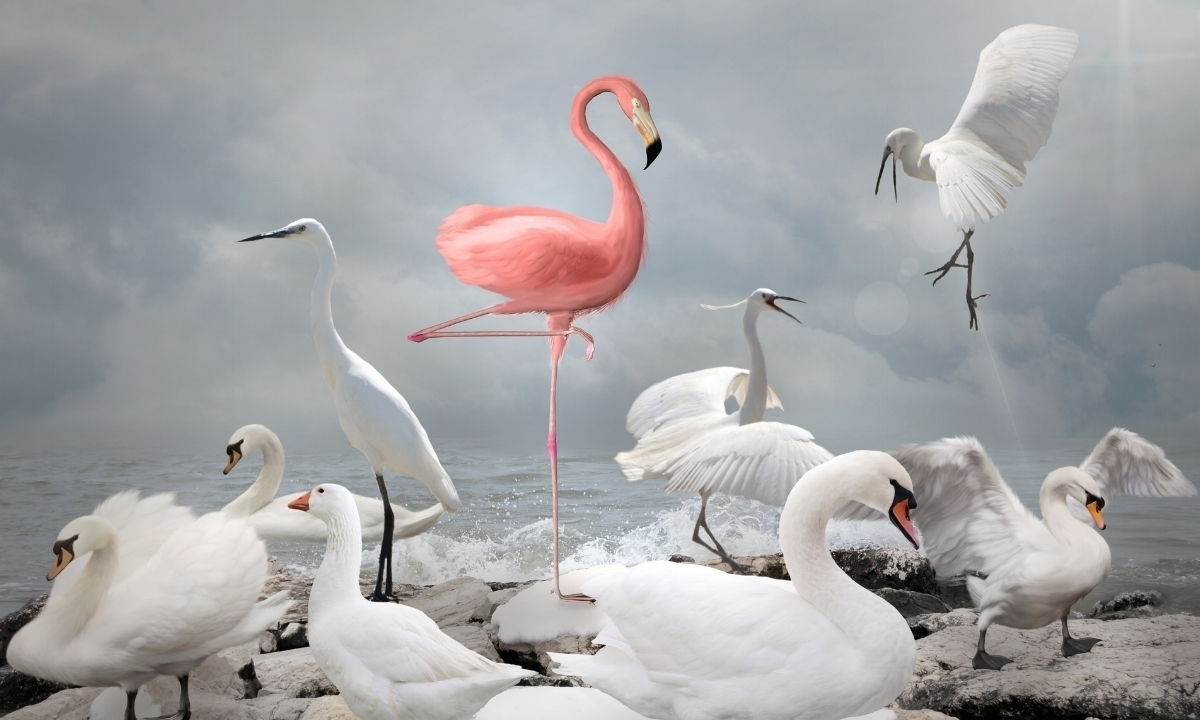 Flamingos are memorable and full of surprises. Just like a good story! Let Flamingo Strategies help you tell yours.