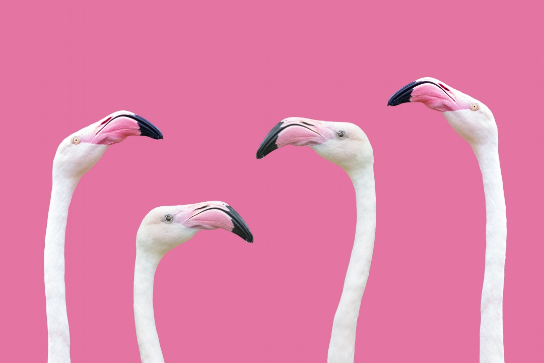 The flamingo is my muse!