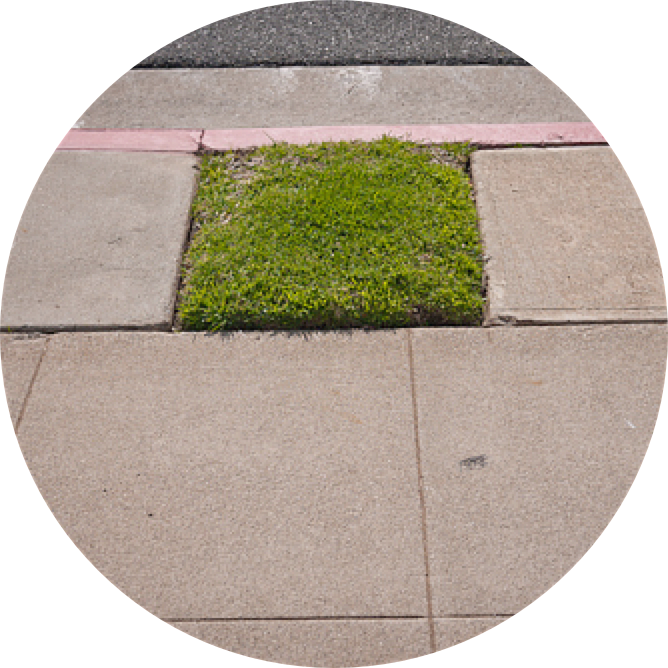 microlawns.png
