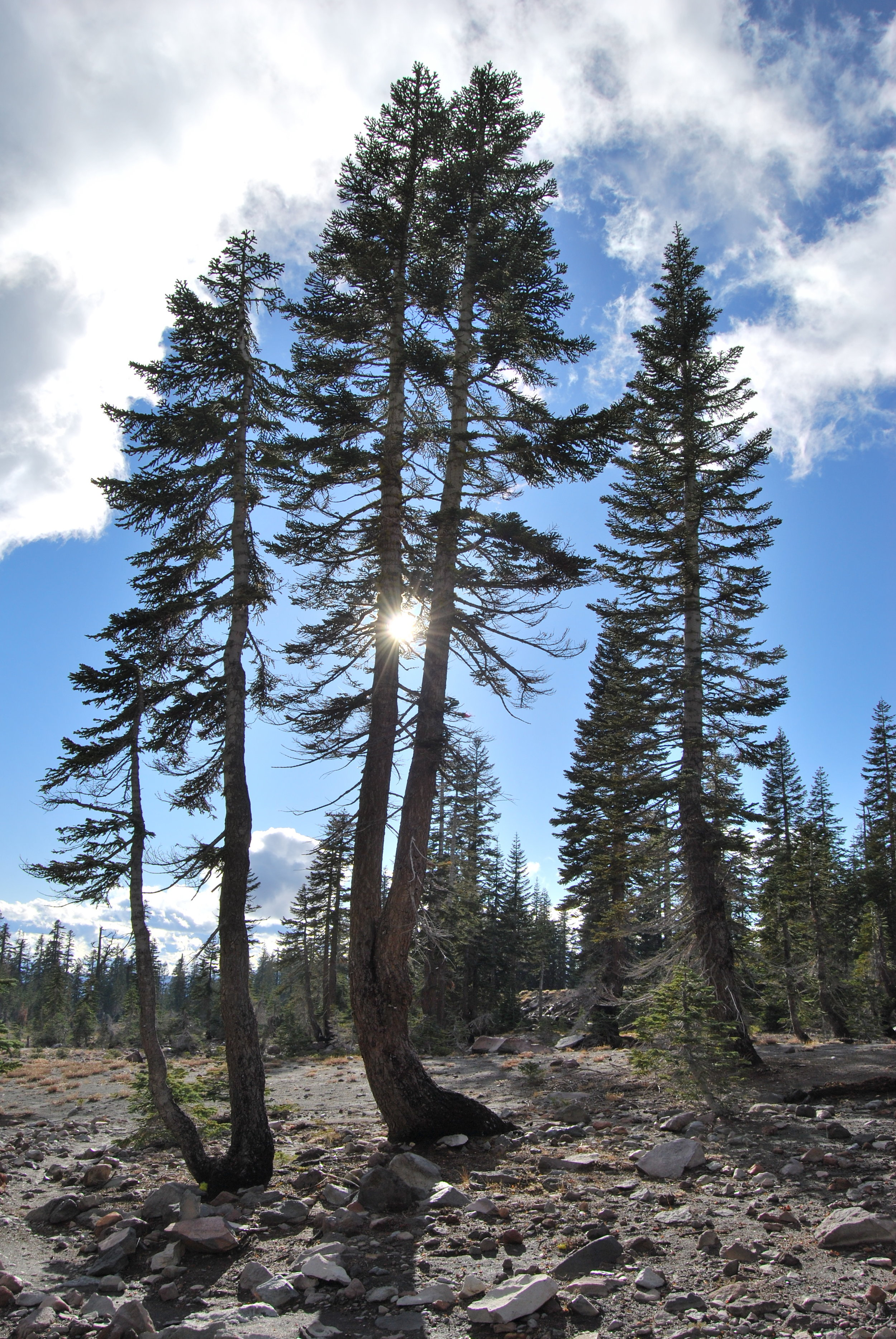 ART & NATURE  Art & Nature Talk at the Bioregional Ecology Center Harvest Dinner, October 28th, 2017   Bioregional Ecology Center  , Mt. Shasta, California
