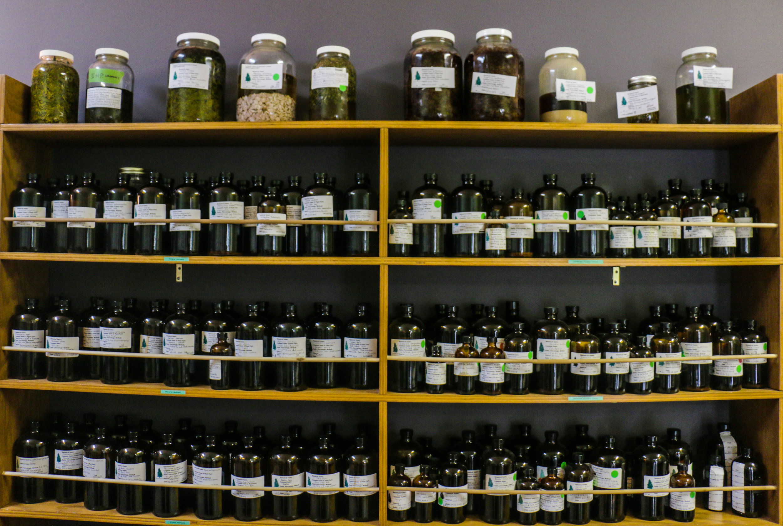 Macerating herbal medicine and finished tinctures in jars on a shelf at the Pine's Herbals apothecary