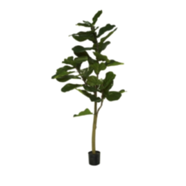 fig tree final.png