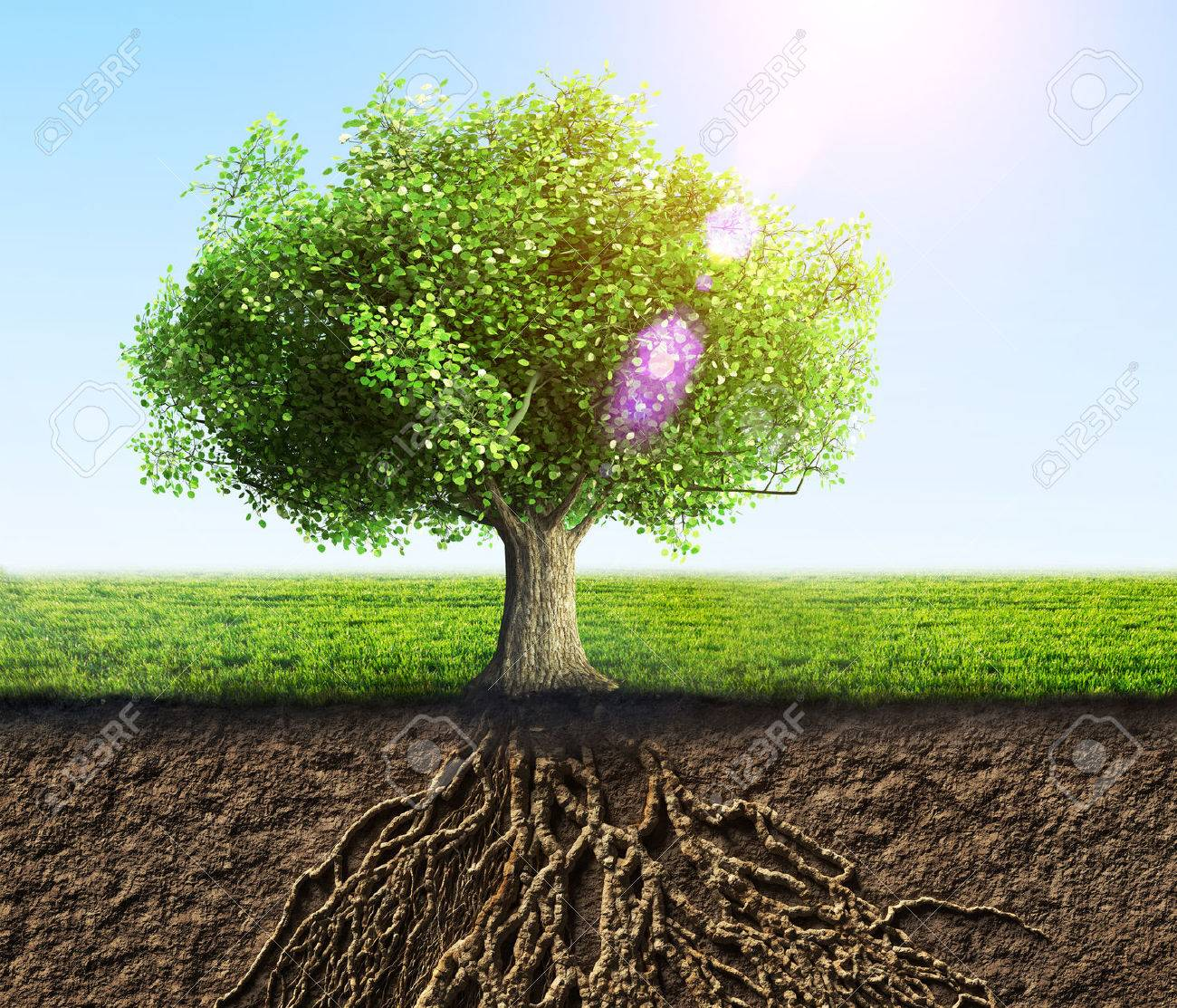 35362381-tree-with-roots-and-soil.jpg