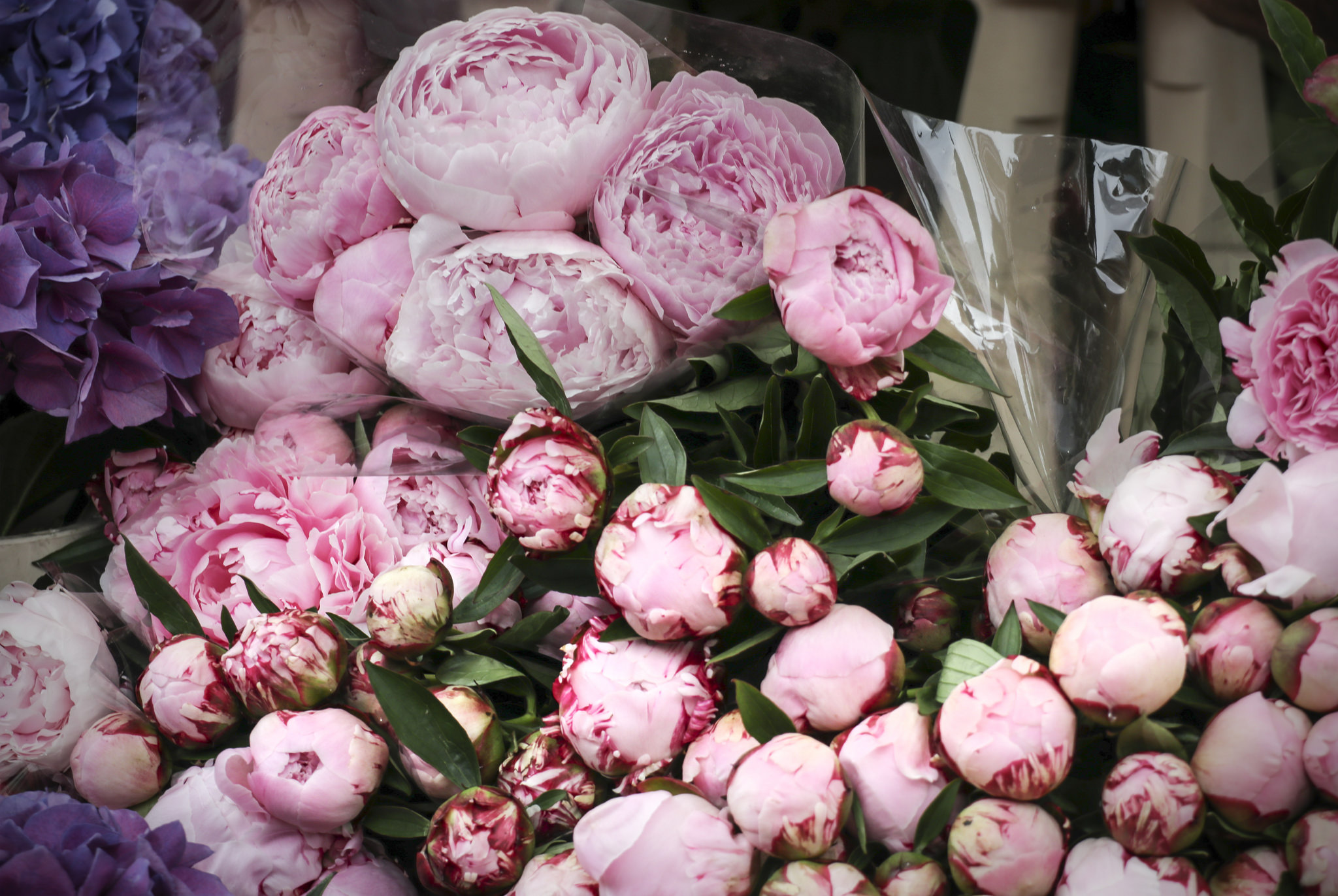 Columbia Road flower market shot by Kotomi